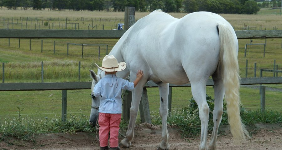 Equine-connection-youth