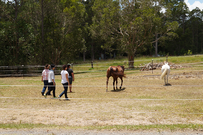 Team-building-Equine-Connection