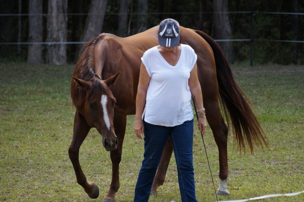 Mental health support through horses