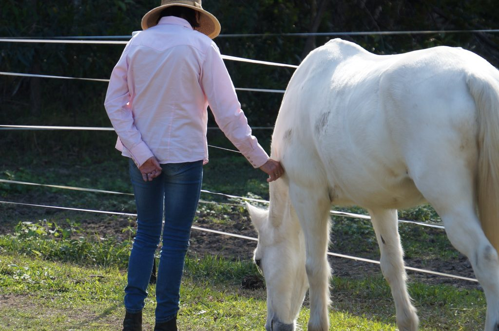 How does Equine Facilitated Learning work?