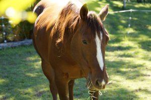 why-horses